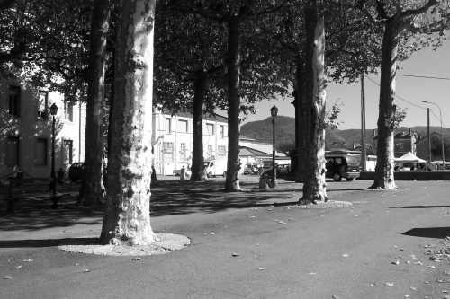Frankreich-autos_hinter_bäumen