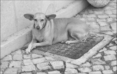 algarve-hund