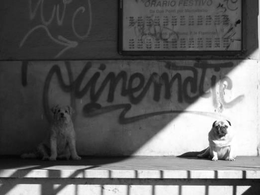 römisches Hundepaar