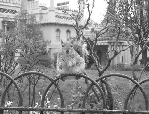 Brighton-Eichhörnchen